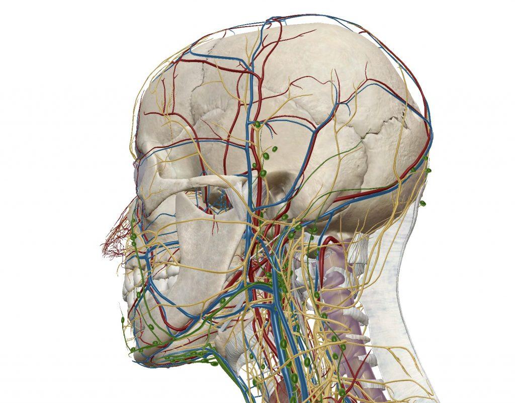 の 痛み 頂部 頭 頭頂部の薄毛は治る?原因や対処法を解説